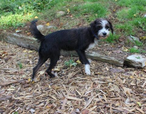 Terrier Mischling <br> Winnie