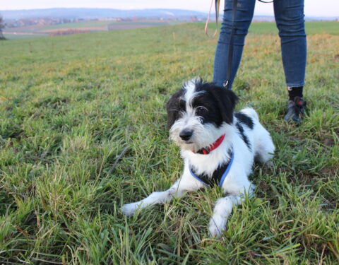 Terrier-Mischling <br> Struppi