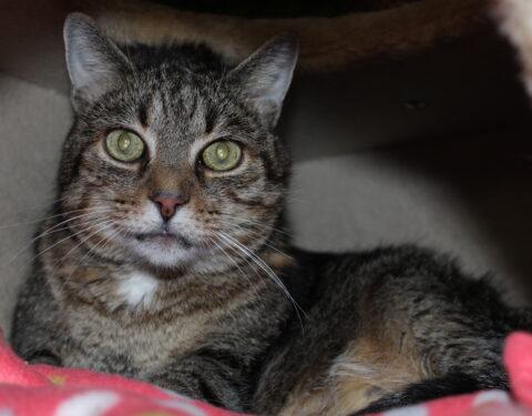 Schnauzer-Mischling <br> Helen & Europäische Hauskatze Mau Mau
